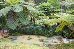 Schöner botanischer Garten von Furnas-Sao Miguel stockfotos