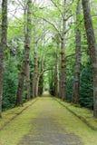 Schöner botanischer Garten von Furnas-Sao Miguel lizenzfreies stockbild