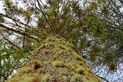 Schöner botanischer Garten von Furnas-Sao Miguel stockbilder