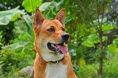 Schöner brauner und weißer Hund mit neuer Natur Stockfoto