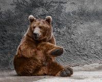 Schöner Brown-Bär Lizenzfreies Stockfoto