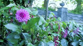 Schöner bunter Blumengarten mit verschiedenen Blumen Stockfotografie