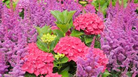 Schöner bunter Blumengarten mit verschiedenen Blumen Lizenzfreies Stockfoto