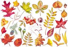 Schöner bunter Herbstlaub der Sammlung lokalisiert auf weißem Hintergrund Kinder für einen Weg im Park, der die Schwäne auf dem T Stockfoto