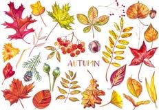 Schöner bunter Herbstlaub der Sammlung lokalisiert auf weißem Hintergrund Kinder für einen Weg im Park, der die Schwäne auf dem T Lizenzfreie Stockbilder