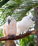 Schöner bunter Papagei Stockfotos