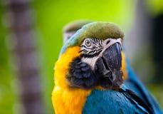 Schöner bunter Papagei Lizenzfreies Stockfoto