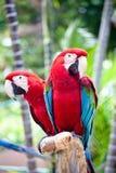 Schöner bunter Papagei Stockbilder