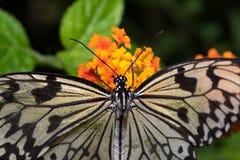 Schöner bunter Schmetterling lokalisiert auf einer Blume stockfotografie