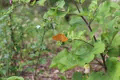 Schöner bunter Schmetterling Silber-wusch Fritillary auf blühender Distel in der Wiese Sommertag, unscharfer Hintergrund Stockfotos