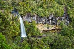 Schöner Dawson Falls in Nationalpark Egmont stockfoto