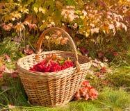 Schöner farbiger Herbst Herbsternte im Korb Lizenzfreie Stockfotografie