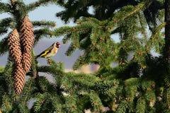 Schöner farbiger Vogel auf der Niederlassung stockfoto