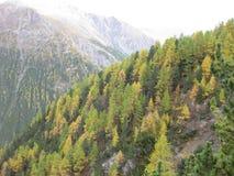 Schöner farbiger Wald im Herbst an einem wunderbaren Tag stockfotografie