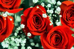 Sch?ner festlicher Blumenstrau? von hellen roten Rosen stockfotos