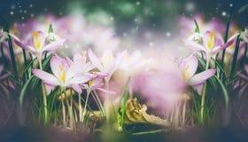Schöner Frühjahrnaturhintergrund mit Krokussen und dem Schneeglöckchenblühen stockbild