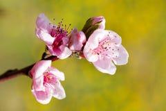 Schöner Frühling lizenzfreies stockbild