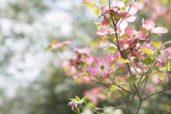 Schöner Frühling Lizenzfreie Stockfotografie