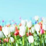 Schöner Frühling blüht auf einem Unschärfehintergrund eines blauen Himmels Bou Lizenzfreie Stockbilder