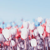 Schöner Frühling blüht auf einem Unschärfehintergrund eines blauen Himmels Bou Stockbild