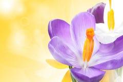 Schöner Frühling blüht Hintergrund Lizenzfreie Stockbilder