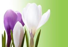 Schöner Frühling blüht Hintergrund Lizenzfreies Stockfoto