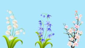 Schöner Frühling blüht weiße Lily Of The Valley, blaue Glockenblume und Rosa Sakura Animation mit Alpha Chanel For Greeting und h stock footage