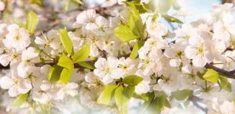Schöner Frühlings-Naturblütenhintergrund Lizenzfreie Stockfotografie