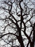Schöner Frühlingsbaum, Litauen Lizenzfreies Stockfoto