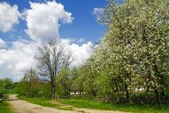 Schöner Frühlingsgarten im alten Dorf Stockfotos