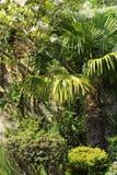 Schöner Frühlingsgarten in Schottland Lizenzfreie Stockbilder