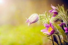 Schöner Frühlingshintergrund Stockfotos