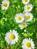 Schöner Frühlingshintergrund Lizenzfreie Stockfotos