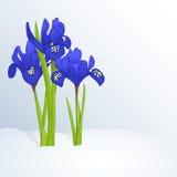 Schöner Frühlingshintergrund mit Iridodictyum im Schnee für Glückwünsche mit Frühling oder der Frauen Tag Feiertagsplakat Lizenzfreies Stockbild