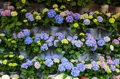 Schöner Frühlingshintergrund mit Reihen von farbigen Blumen Stockbilder