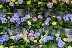 Schöner Frühlingshintergrund mit Reihen von farbigen Blumen Stockbild