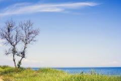 Schöner Frühlingsmeerblick mit grünem Gras Stockbild