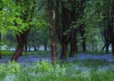 Schöner Frühlingsmorgen, blaue Blumen, erstaunliches Licht lizenzfreie stockbilder