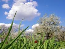 Schöner Frühlingstag Stockbild