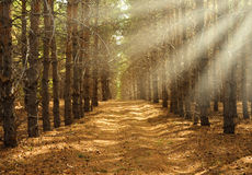 Schöner Frühlingswald Lizenzfreie Stockbilder
