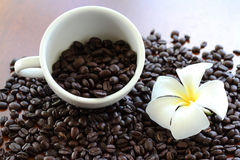 Schöner Frangipani mit Röstkaffeebohnen Stockbilder