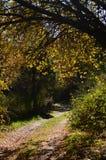 Schöner Fußweg verpackt mit herbstlichen Blättern am Ufer des Pajero-Reservoirs 14. November 2015 Natur, Reise, Landschaften stockfotos