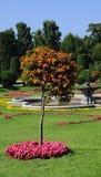 Schöner Garten Stockbilder