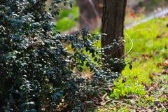 Schöner Garten - Afrika lizenzfreies stockbild