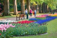 Schöner Garten der bunten Blumen im Frühjahr Lizenzfreie Stockbilder
