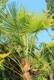 Schöner Garten der Palmen im Frühjahr Stockfotografie