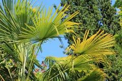 Schöner Garten der Palmen im Frühjahr Stockfoto
