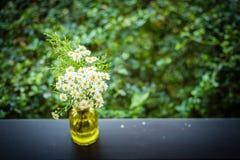 Schöner Garten des Sommers oder des Frühlinges mit Gänseblümchen blüht auf Holztisch Stockbild