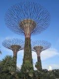 Schöner Garten durch die Bucht in Singapur Stockfotos