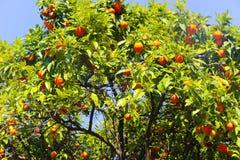 Schöner Garten mit Baum stockfotografie